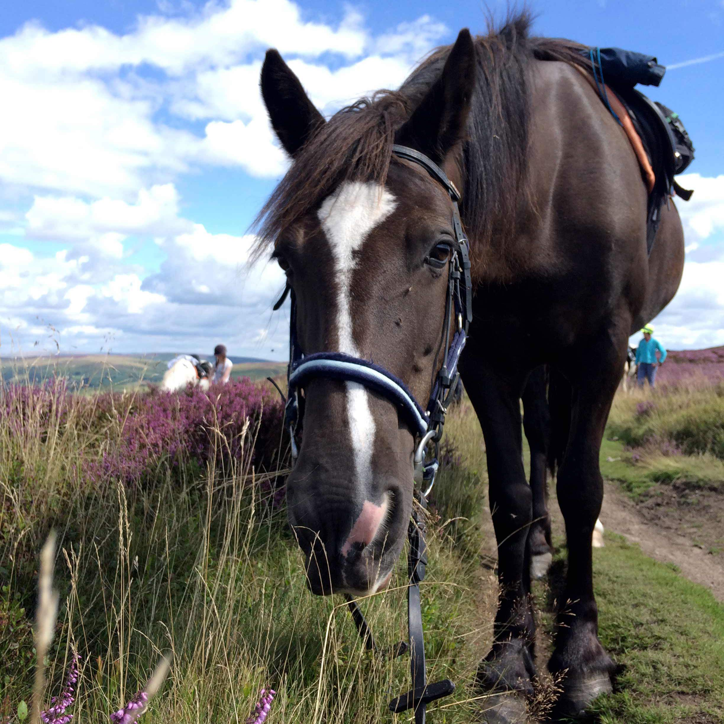horse riding holidays begwns trail