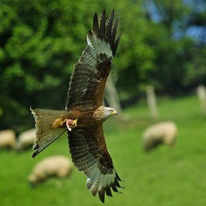 Horse riding holidays red kite trail
