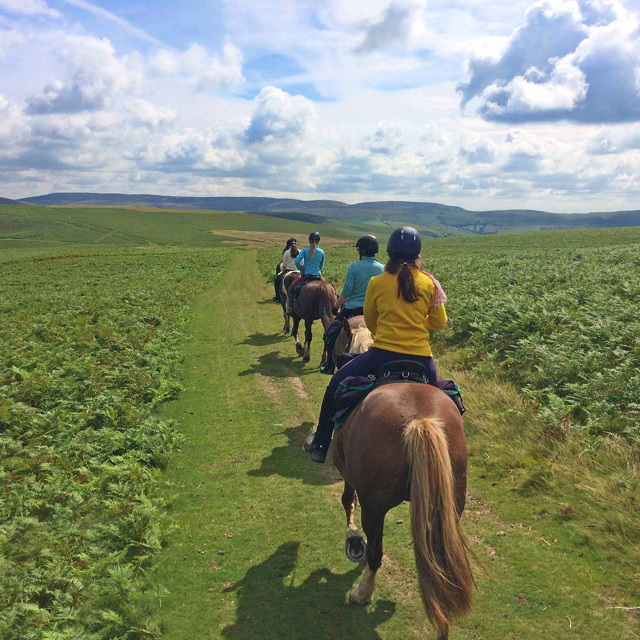 horse riding holidays radnor fforest trail