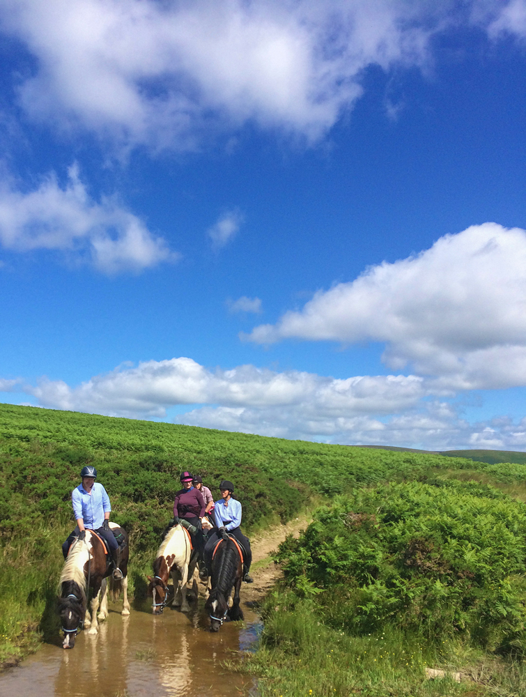 The Freerein ponies enjoying a pit stop on Llanbedr Hill