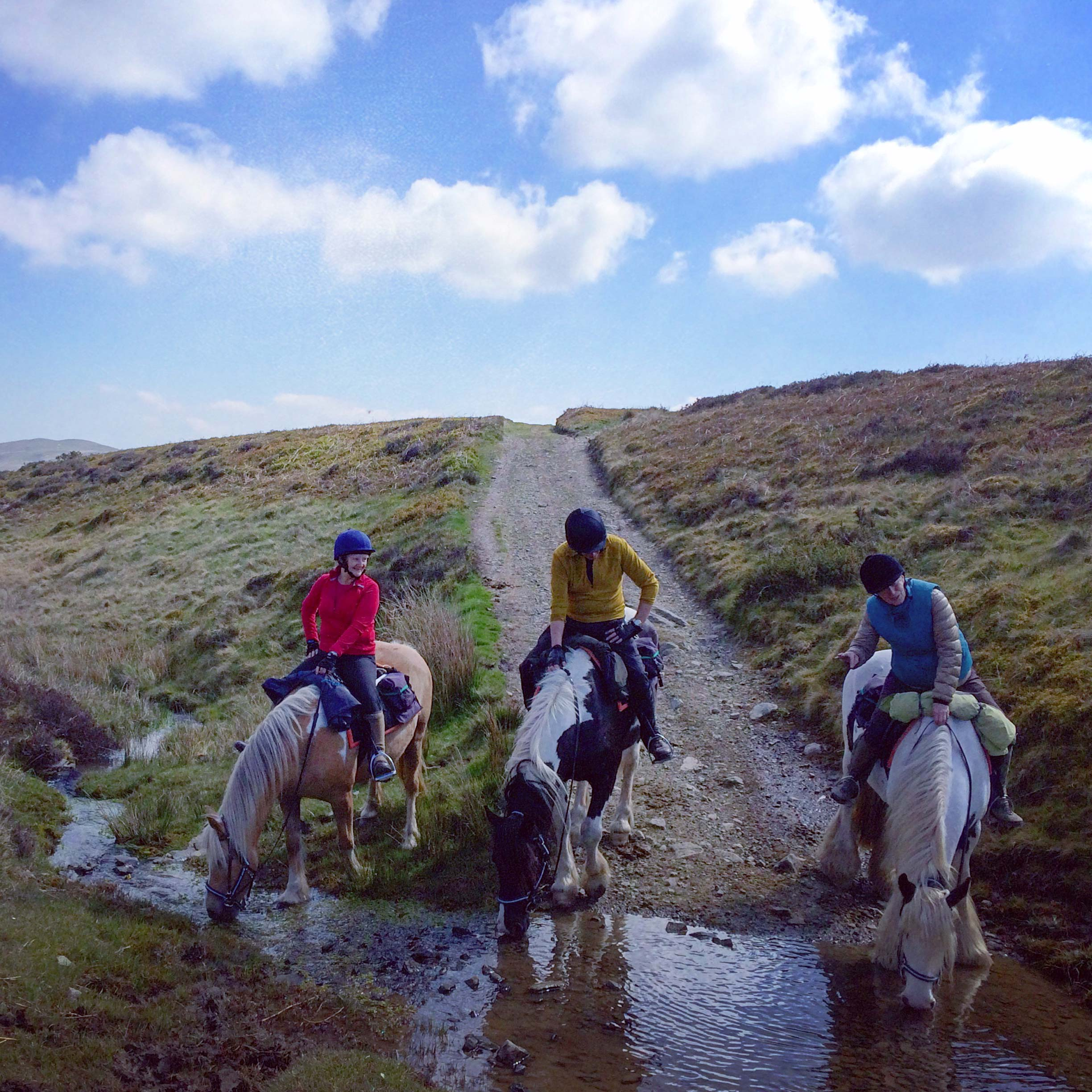 Horses drink from a remote stream out in the hills