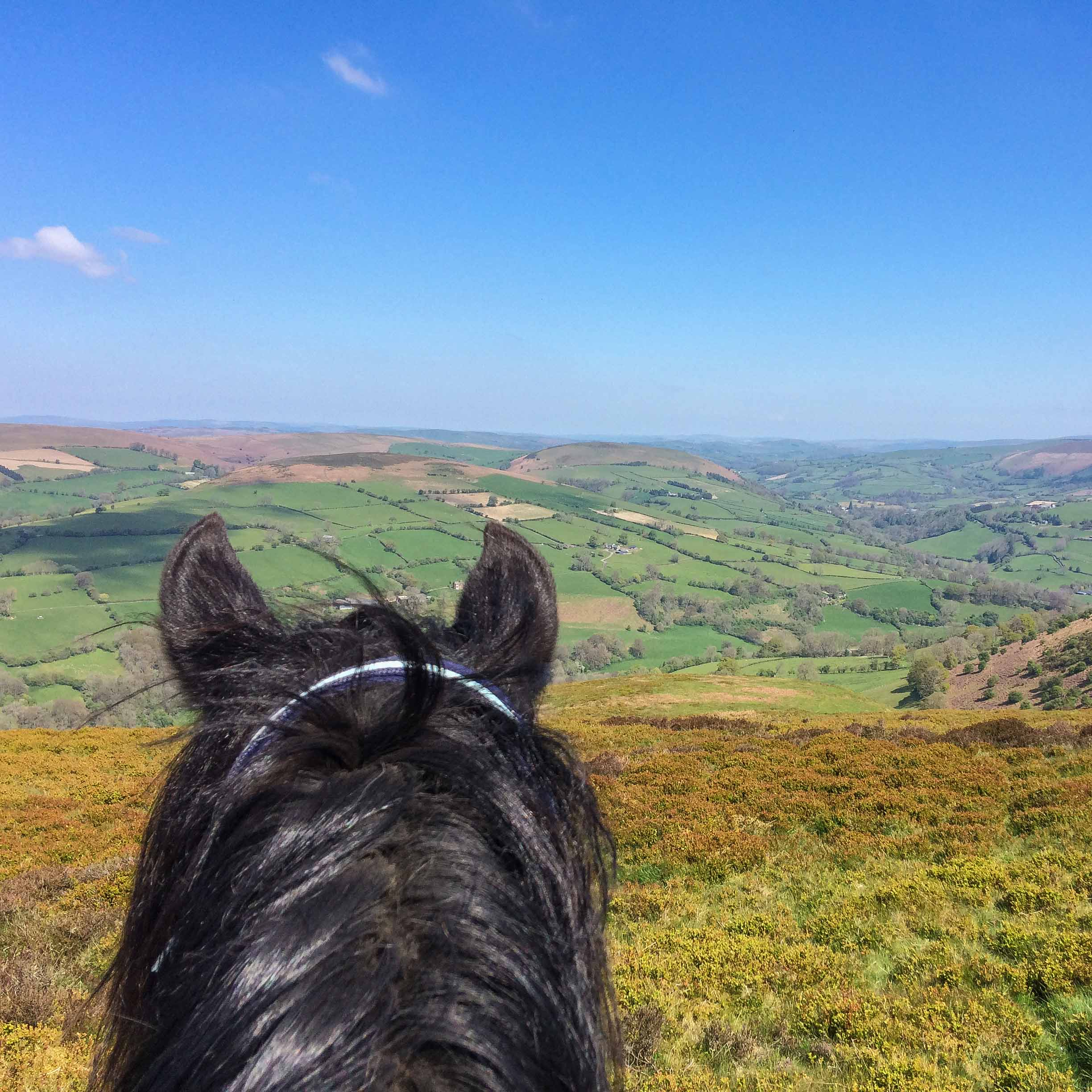 No better way to enjoy these views than through a pair of Freerein ears!