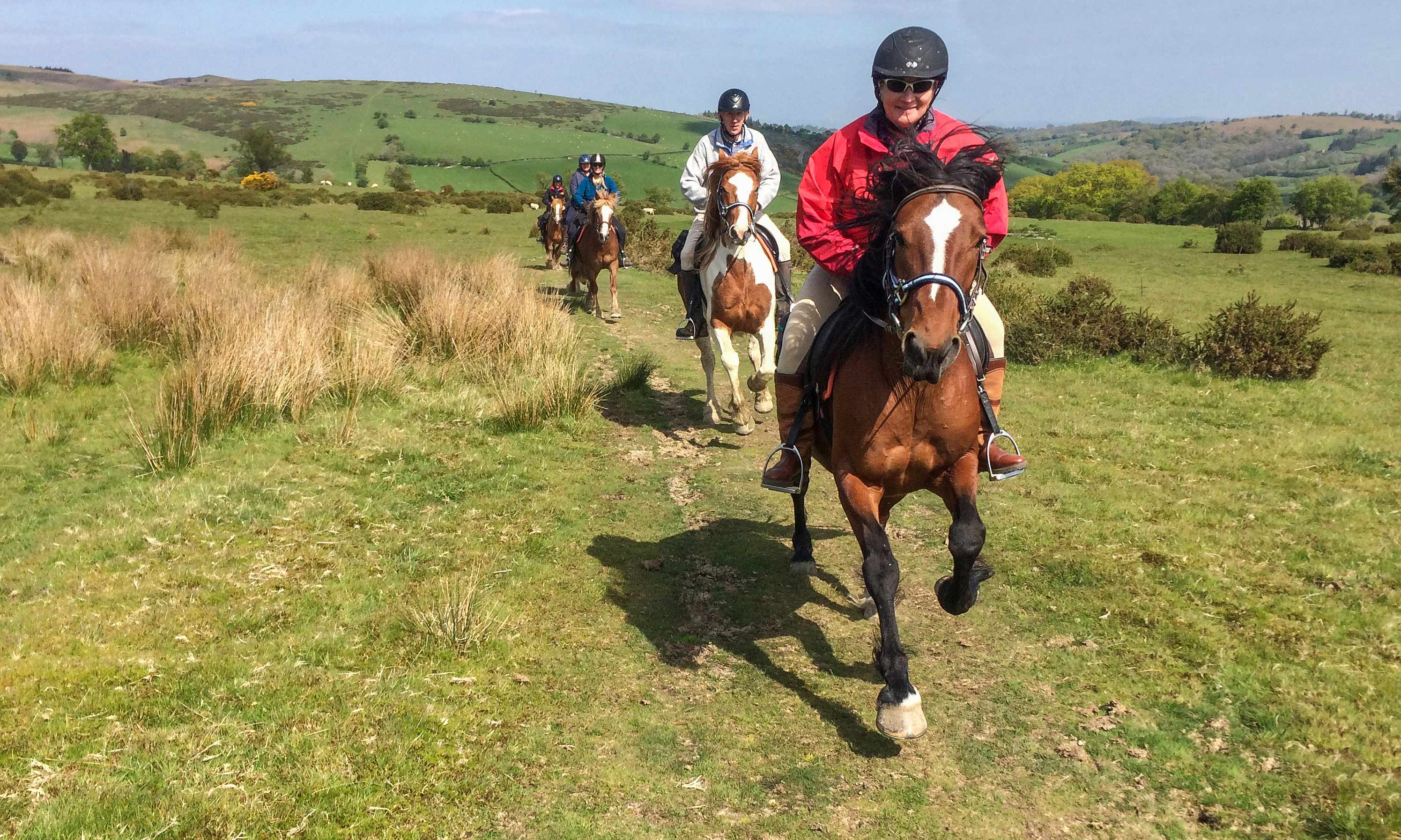 Freerein Molly and friends enjoying a canter on the way back to Freerein HQ