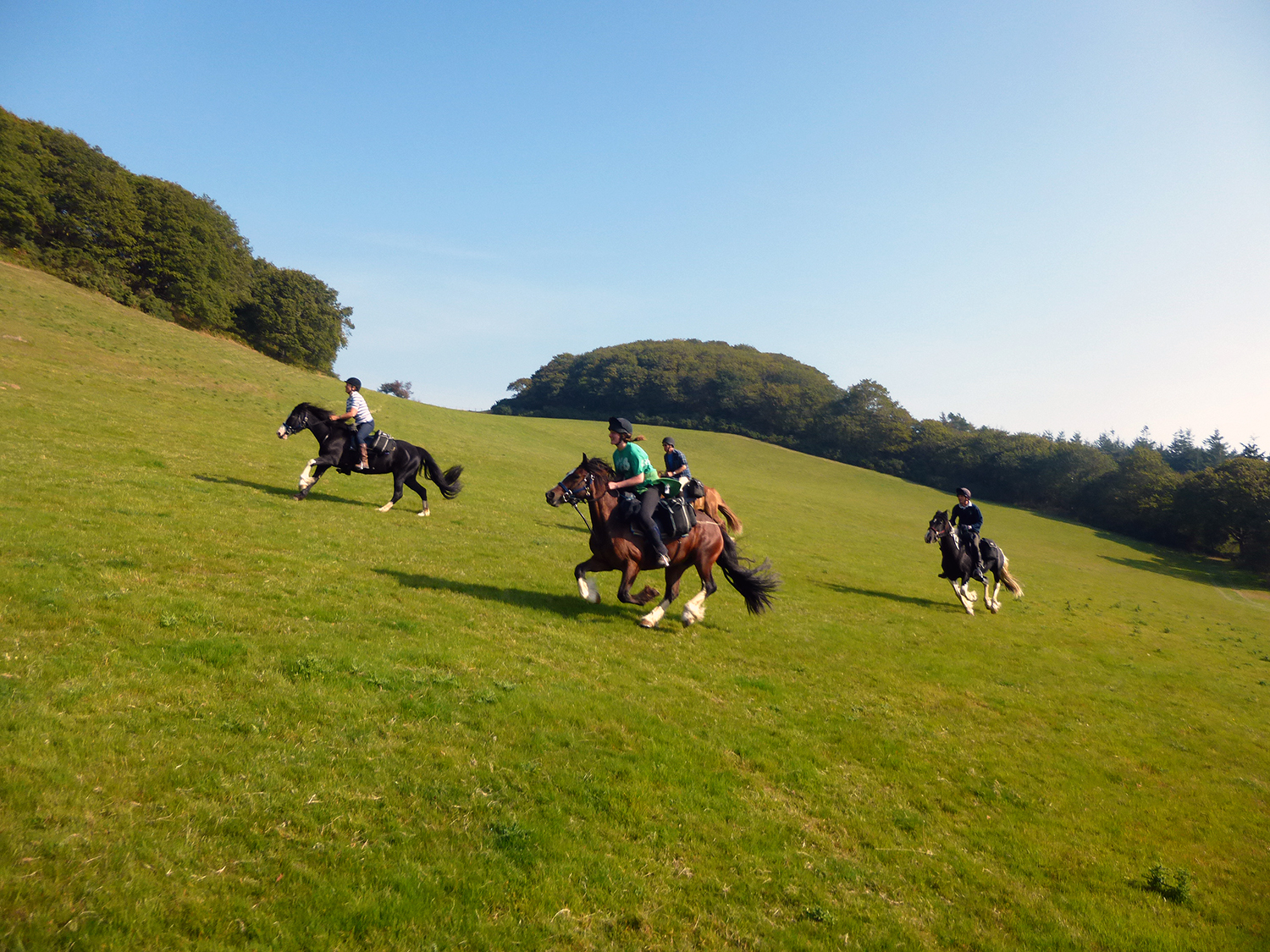 Enjoy relaxed canters on a trysty Freerein steed on your Freerein riding holiday