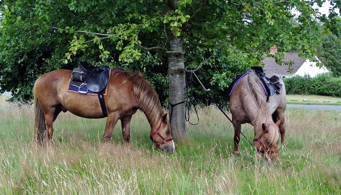 Leave your horses to enjoy some lush grass and relax over a pub lunch on your riding holiday
