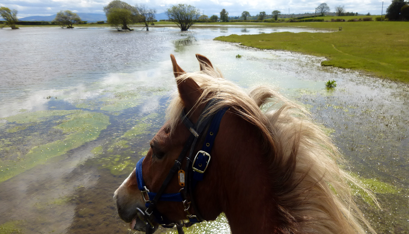 Charlie pauses for a drink out on a Freerein trail riding holiday in Wales