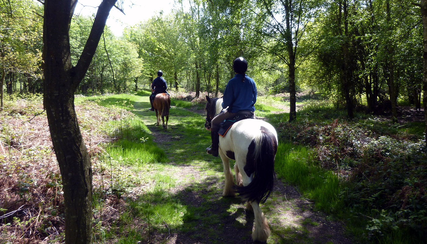 Travel through woodland, across open hill and ford streams on your Bespoke Guided trail riding holiday