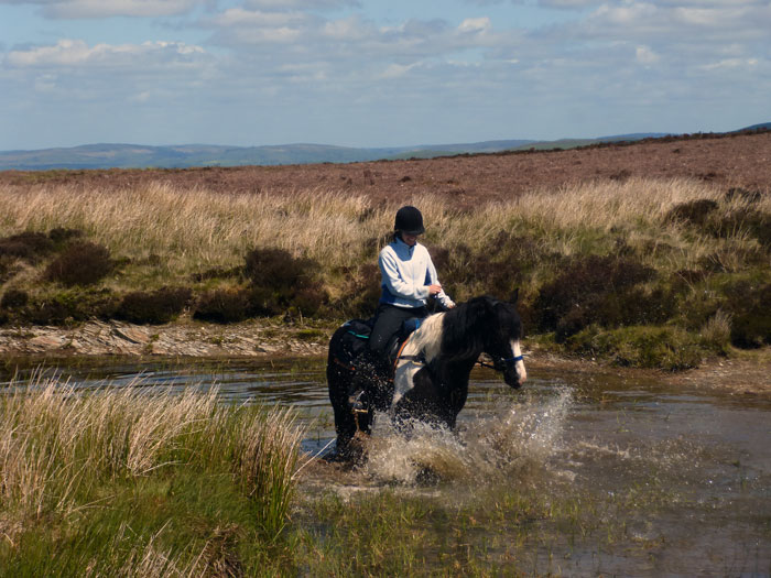 Pausing for a splash in a pond on a Guided Trail with Freerein
