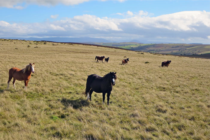 Ride past herds of wild ponies on Freerein Guided riding holidays