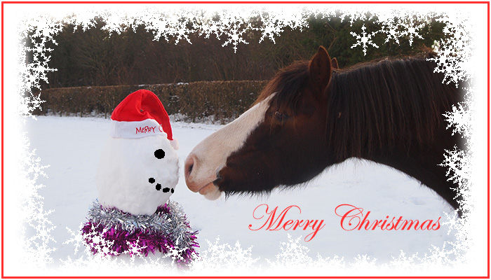 Freerein gift vouchers - for a horse riding holiday of the recipients choice
