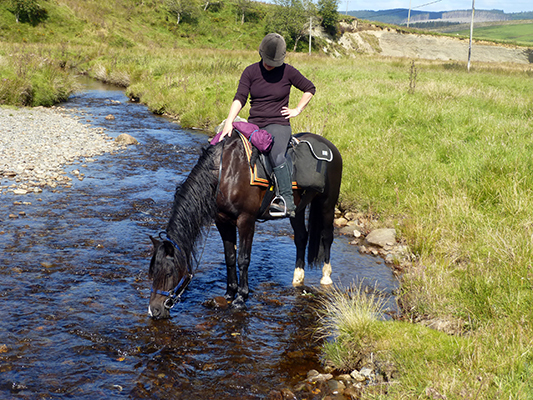 Experience a unique trail riding holiday with Freerein in mid Wales