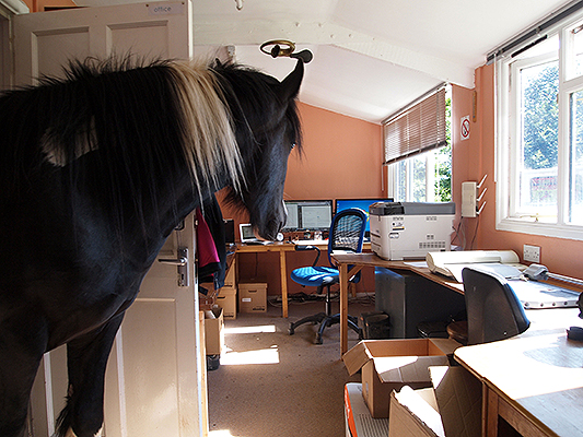 Louie exploring Freerein Riding Holiday's office.