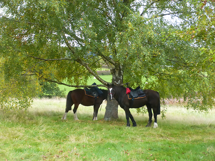Tie the horses near some lucious grass and enjoy a pub lunch on your trail riding holiday.
