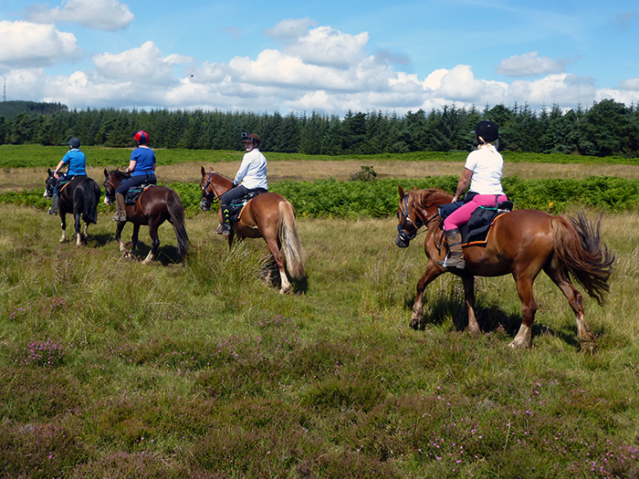 All Freerein horses and ponies are fit, freindly and forward going trail horses.