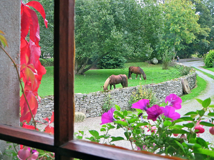 Ziggy & Minstrel seen grazing from the bedroom window of the Old Mill B&B