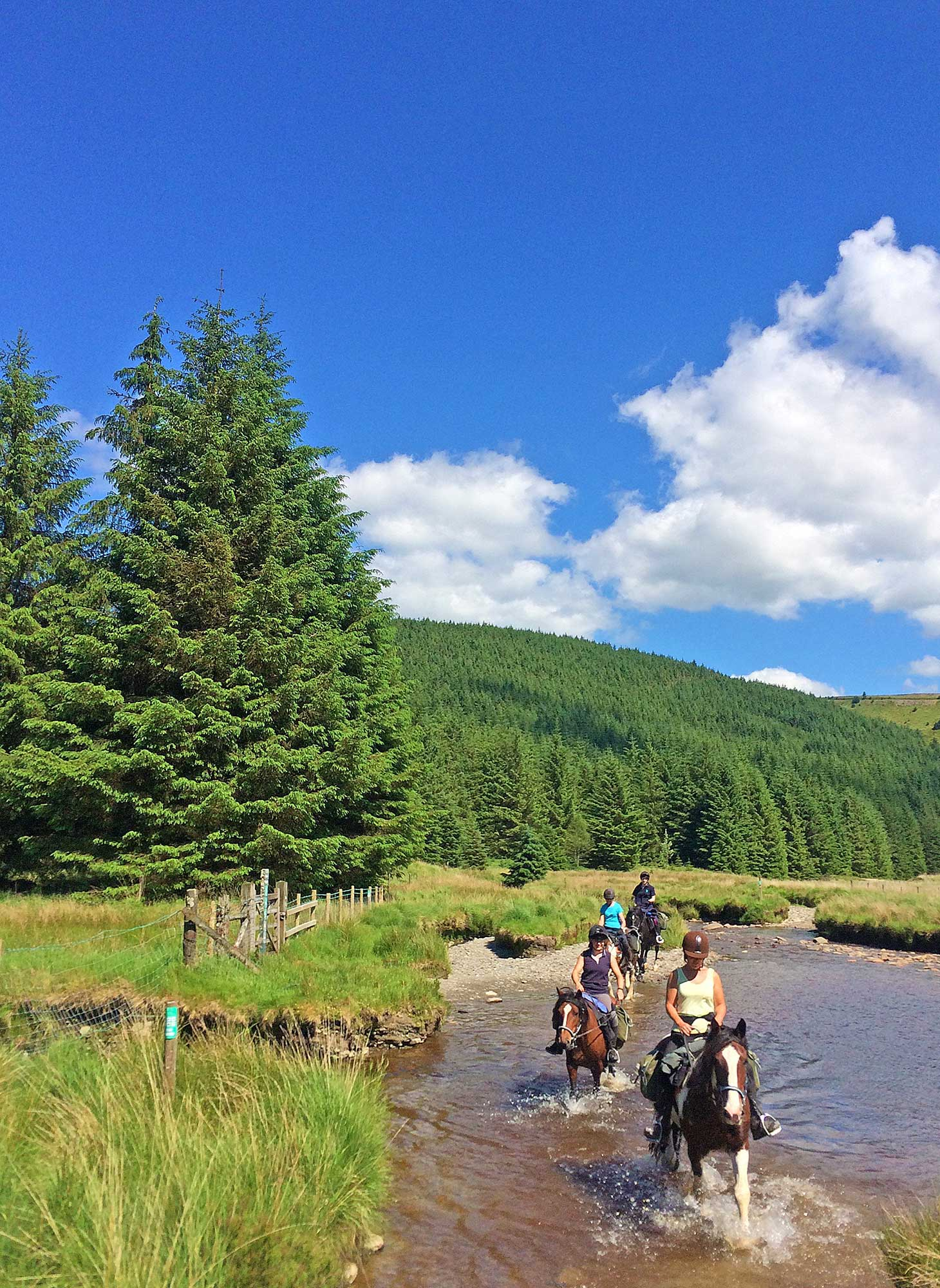 Riding holiday with freerein on the Trans Cambrian South trail ride.