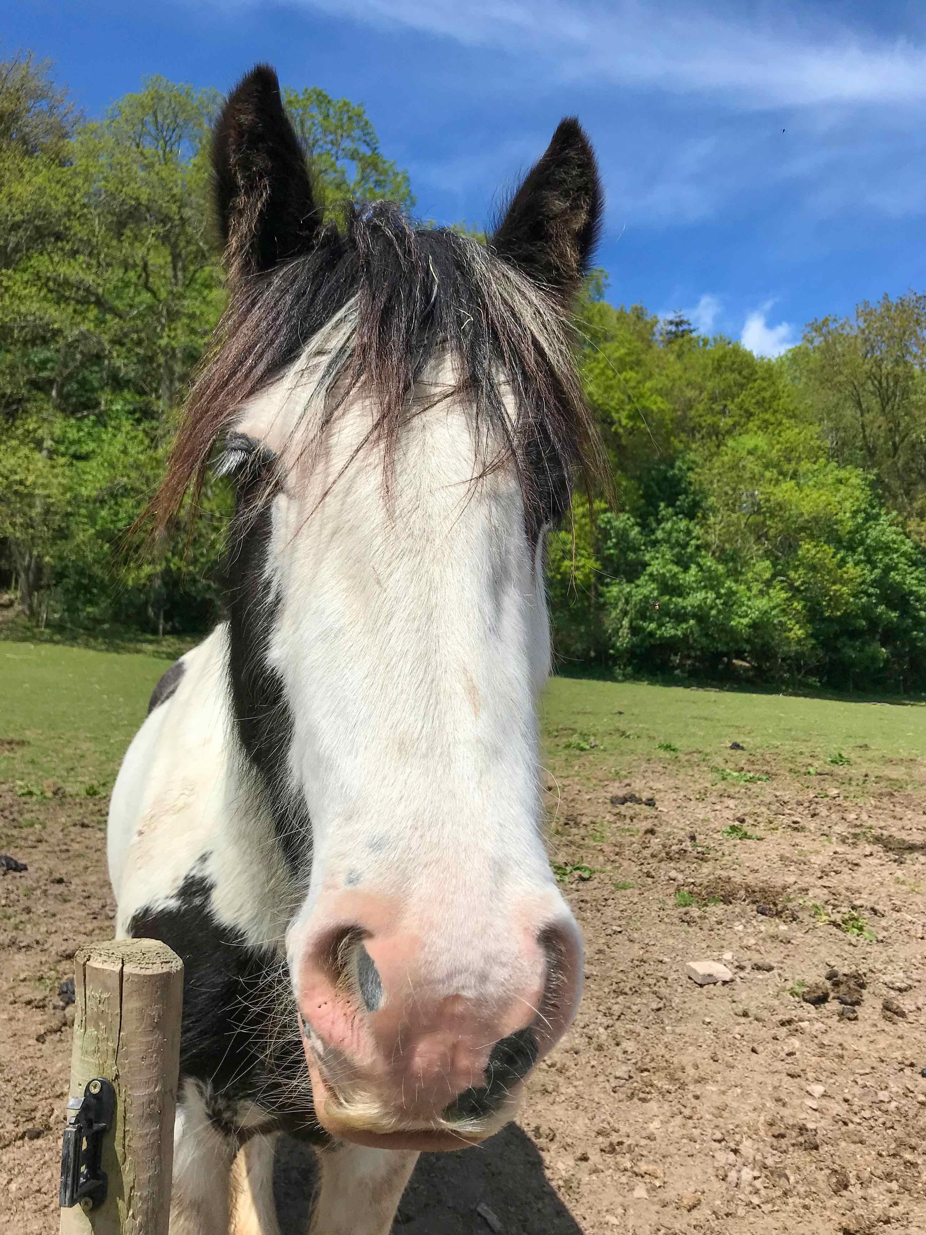 Horse-Abracabra