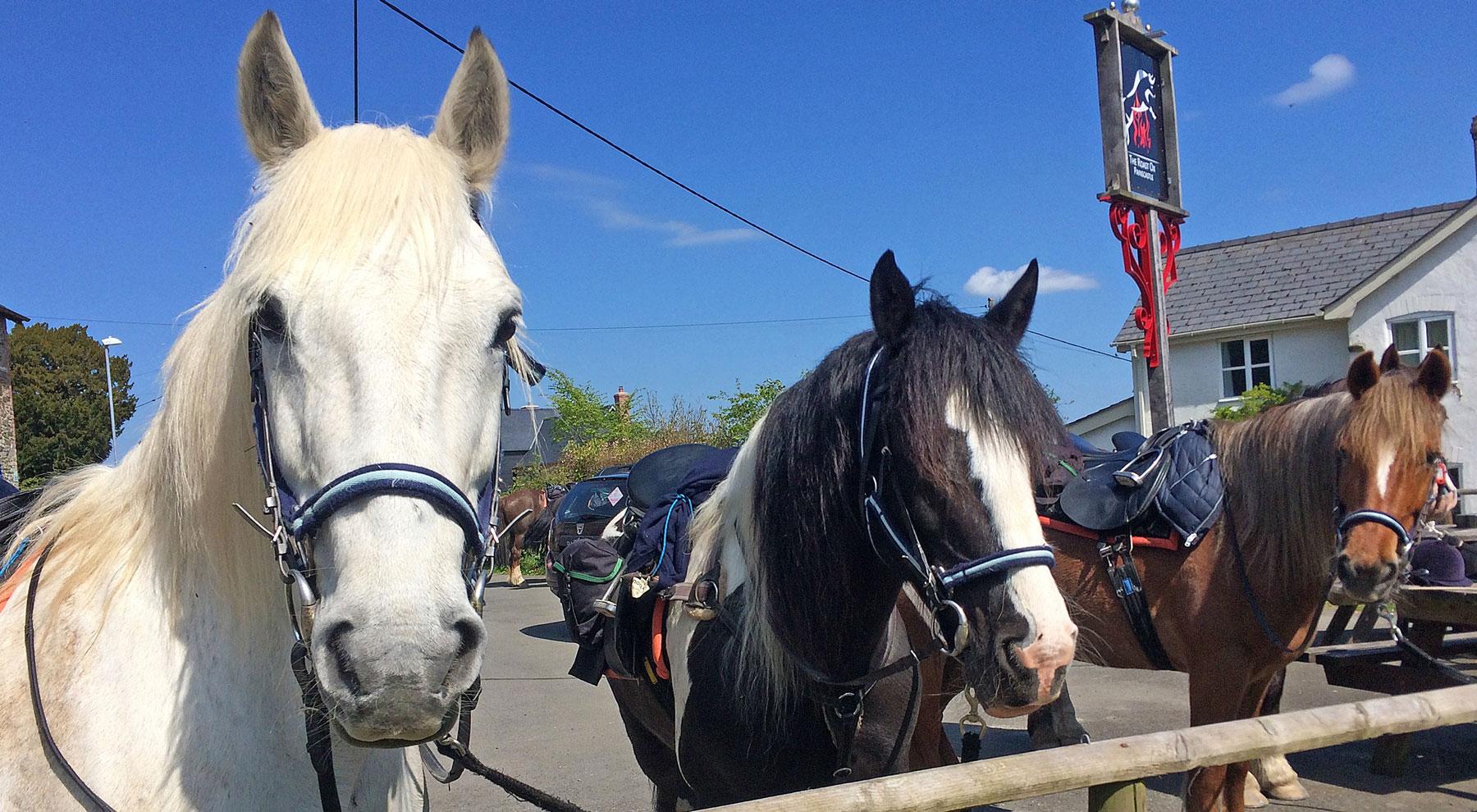 Horses tied up outside a pub
