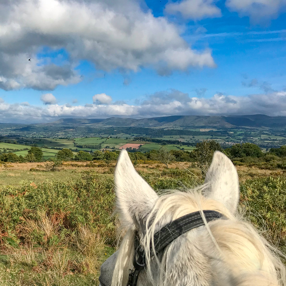 The Freerein horses enjoy the views too!