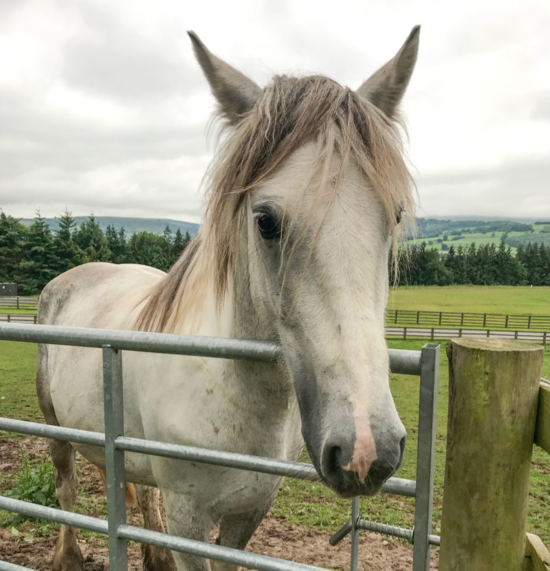 Horse-Bess