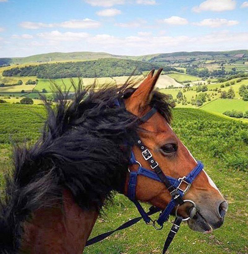 Horse-Faye