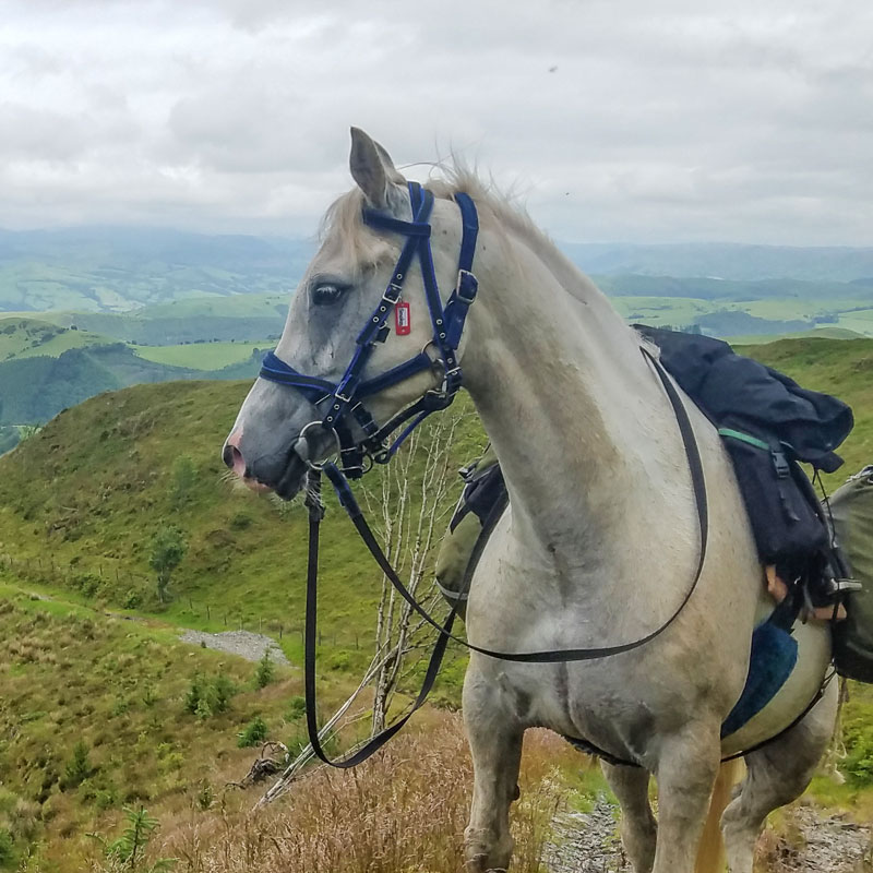 Horse-Smokey